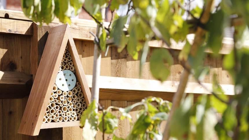 Create a wildlife-friendly environment in your garden